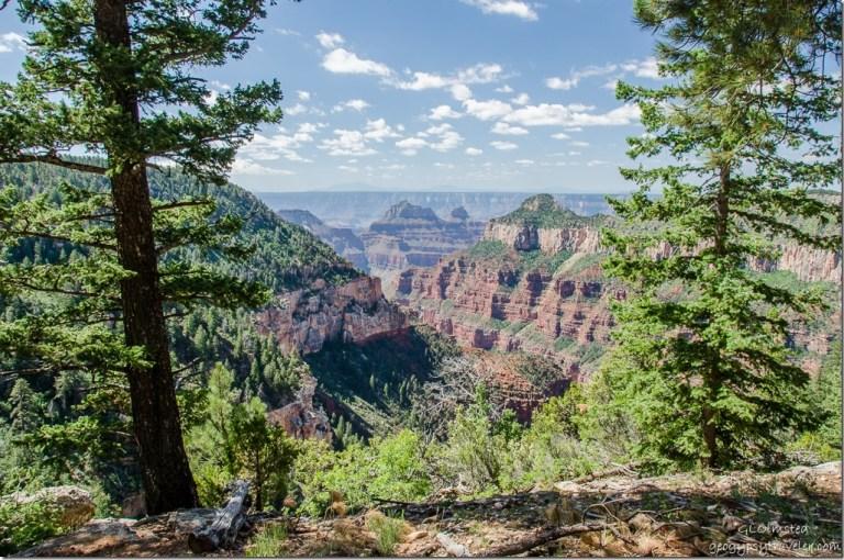 Canyon view Widforss Trail North Rim Grand Canyon National Park Arizona