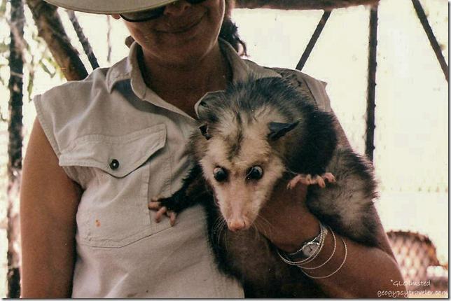 Chiquita & Frick Opossum California Living Museum Bakersfield California