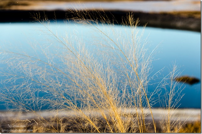 Dry grass Tecopa hot springs campground Tecopa California