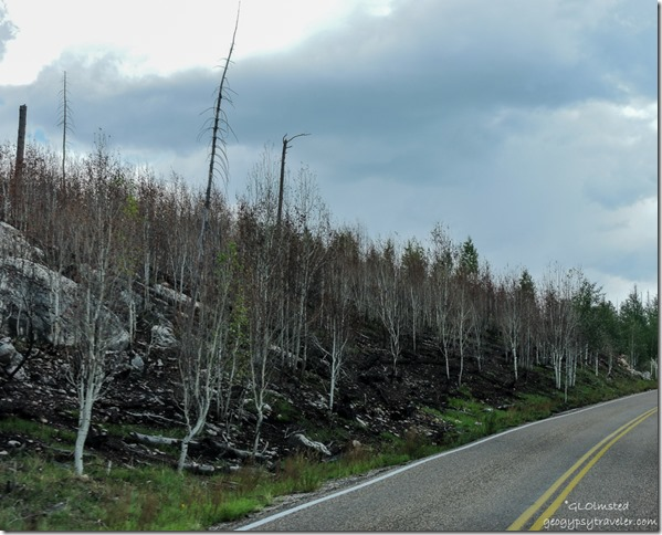 2016 Fuller Fire scenic road North Rim Grand Canyon National Park Arizona