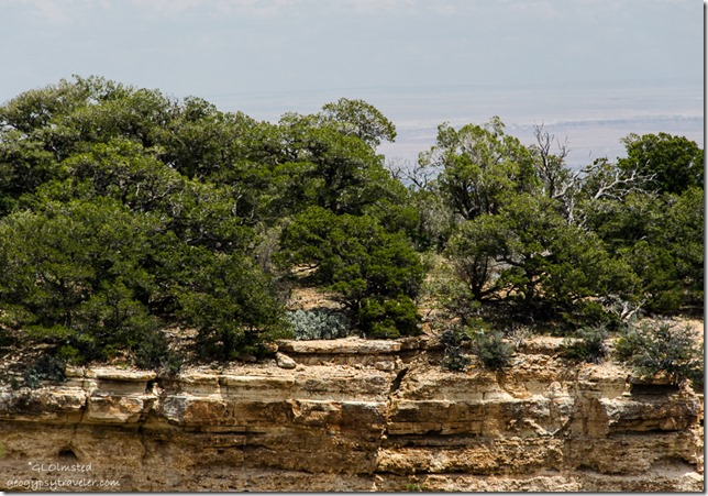 Canyon wall Walhalla overlook North Rim Grand Canyon National Park Arizona