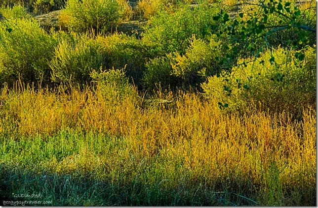 Light on plants Kirkland Arizona