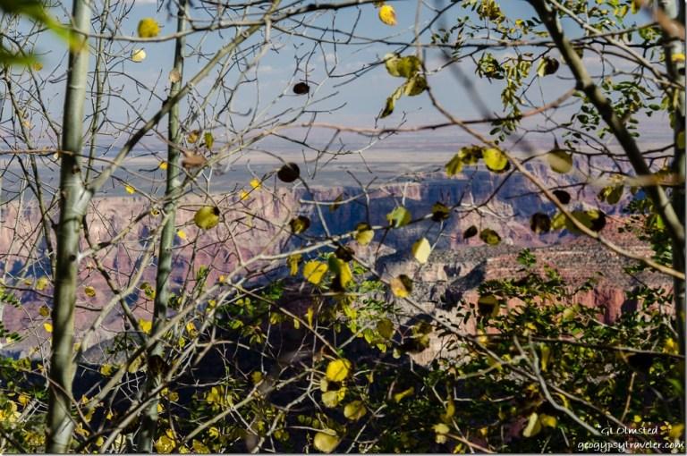 Fall aspen & canyon view Ken Patrick trail North Rim Grand Canyon National Park Arizona