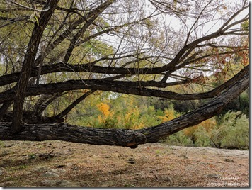 Willow Hassayampa River Rest Area Wickenburg Arizona