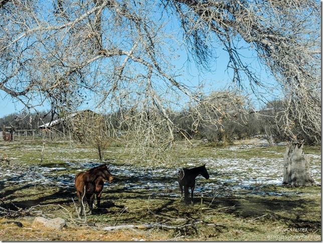 Horses Iron Springs Road Skull Valley Arizona