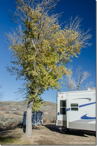 Leaved cottonwood by RV Kirkland Arizona
