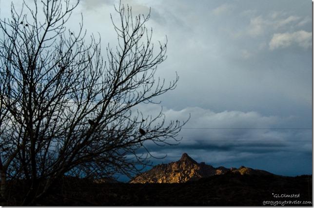 Birds tree clouds last light Martin Mountain Kirkland Arizona