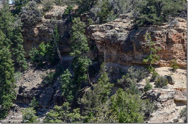 Sky Island Walhalla Plateau North Rim Grand Canyon National Park Arizona