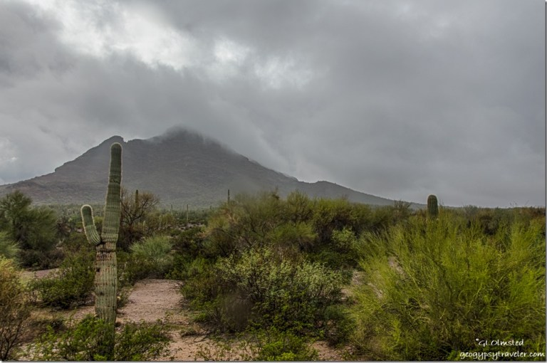 Low clouds Black Mountain saguaro Darby Well Road BLM Ajo Arizona