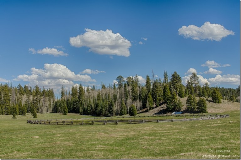 meadow forest Crane Lake Kaibab National Forest Arizona