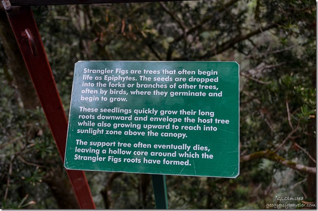 Strangler fig interp sign Tsitsikamma Adventures Storms River South Africa