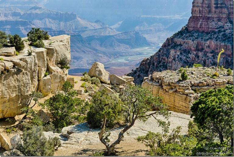 trees rock Colorado River Moran Point South Rim Grand Canyon National Park Arizona
