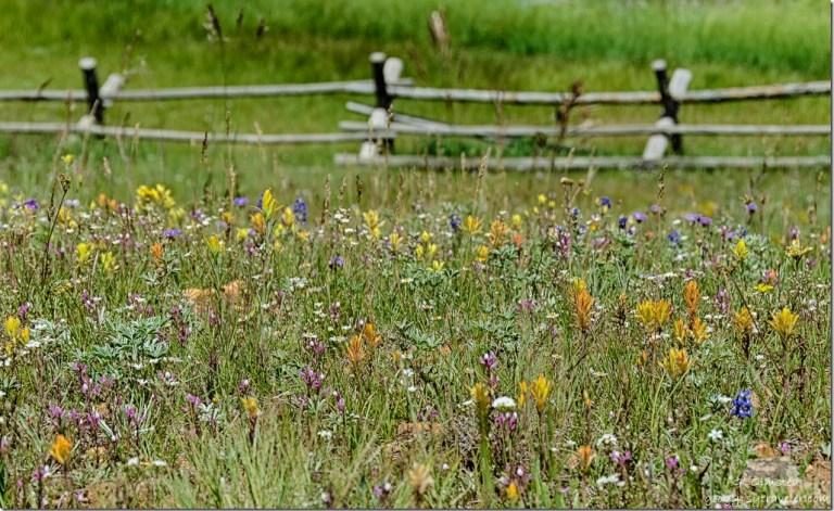 wildflowers fence Deer Lake Kaibab National Forest Arizona