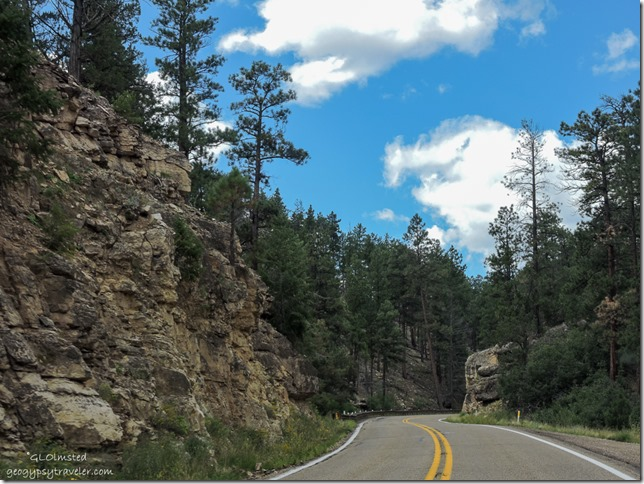 road cut forest clouds Kaibab National Forest SR89A West Arizona
