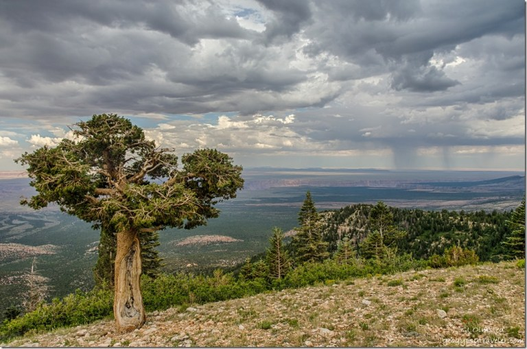 pinyon pine House Rock Valley stormy sky Marble View Kaibab National Forest Arizona