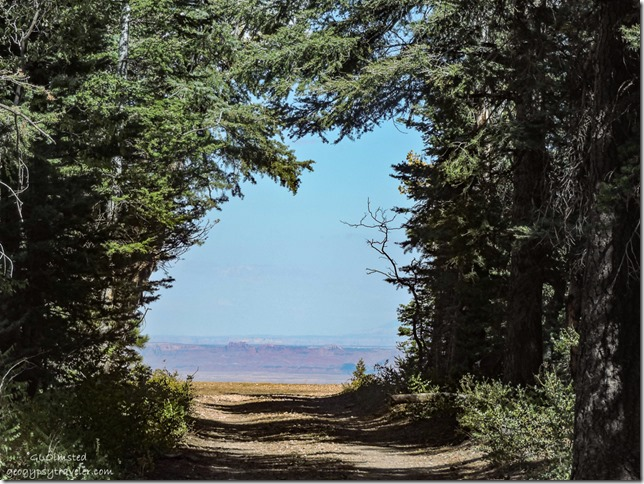 tree tunnel & view Marble View Kaibab National Forest Arizona