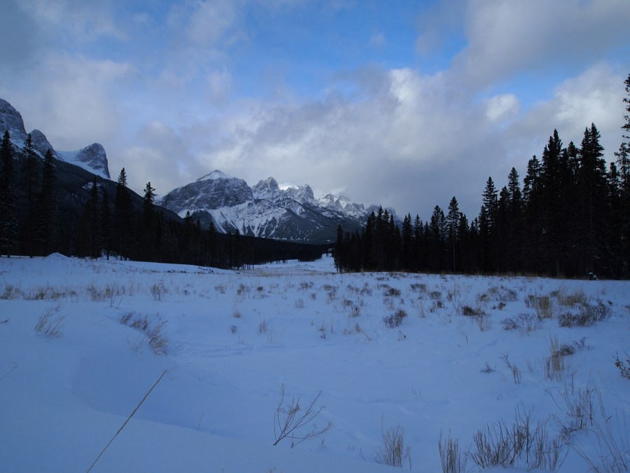 Grasses poking up through the snow in the foreground with Mount Rundle in the distance