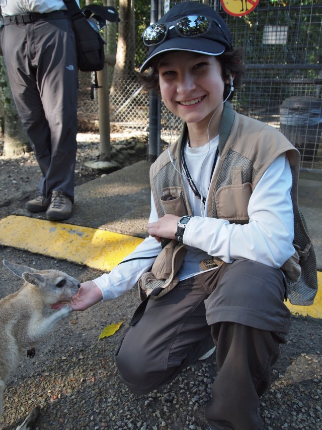 Youngest GeoKid feeds a kangaroo