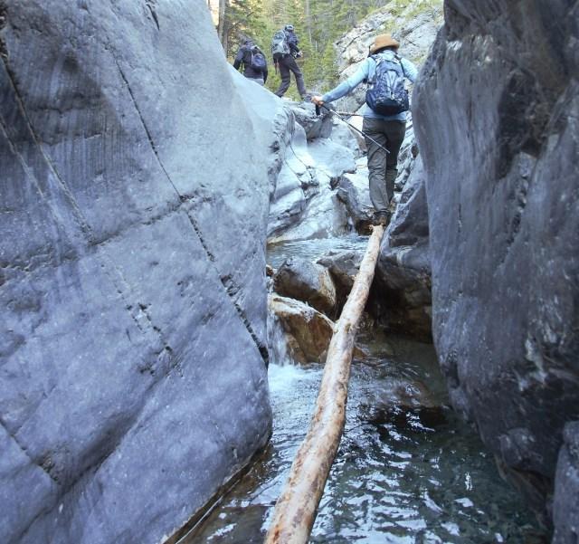 Mrs. GeoK ascends the log