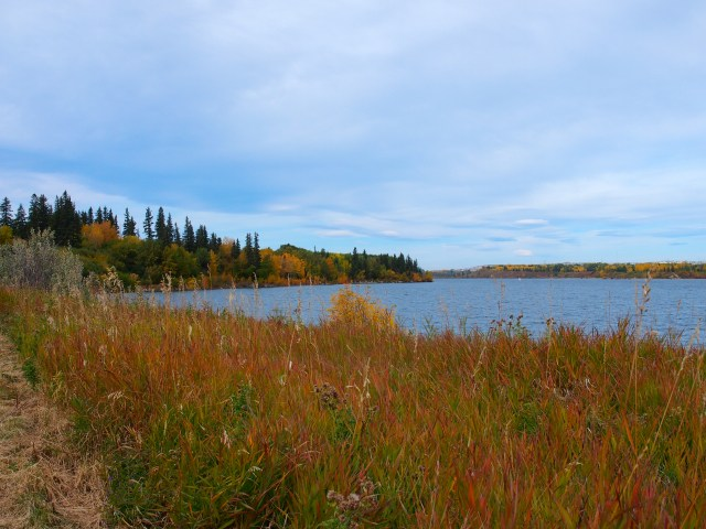 Fall colour along the shore of Glenmore Reservoir
