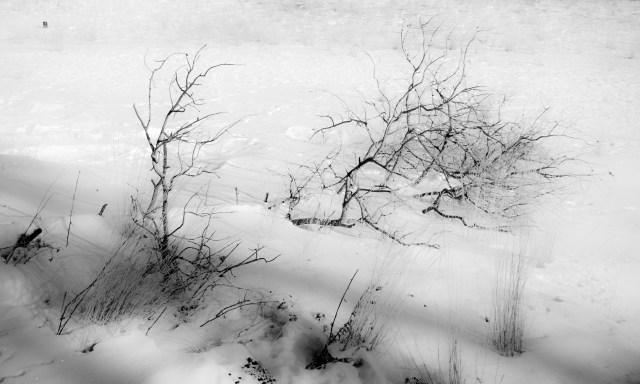 Tree skeleton
