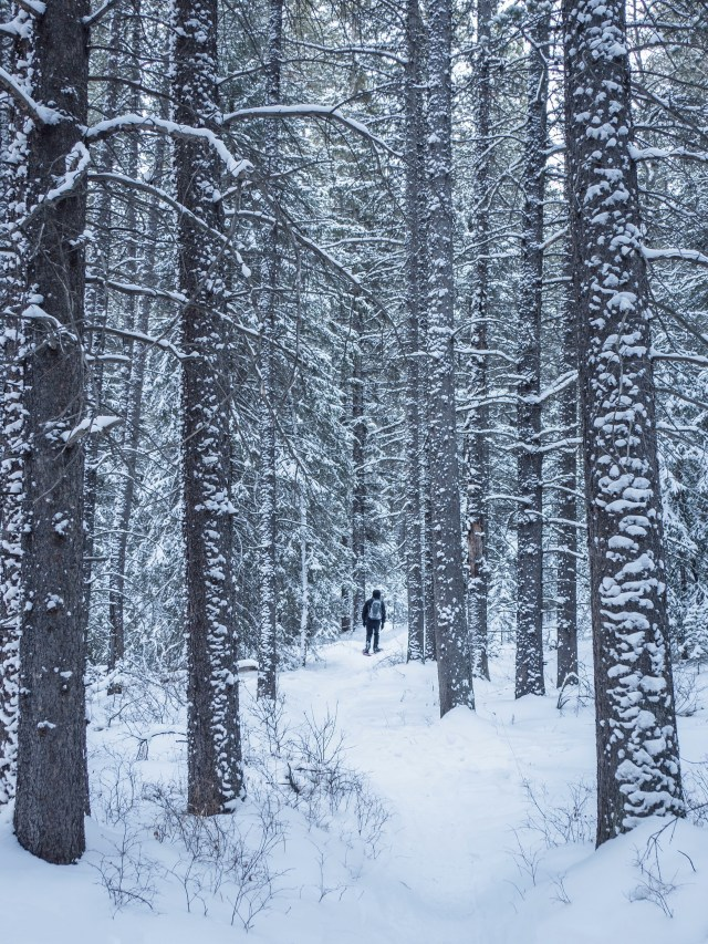 snowshoe-in-woods