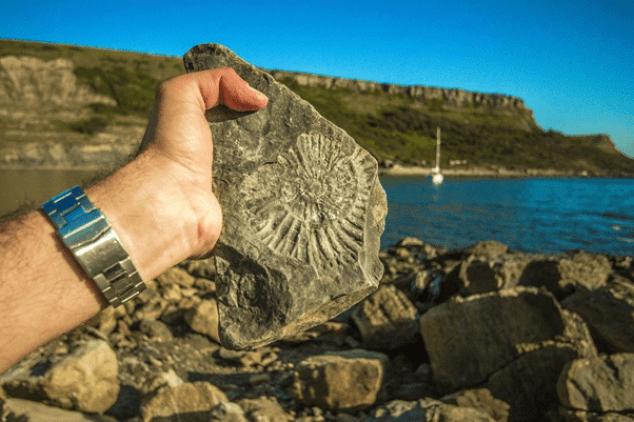 Fossils Organism