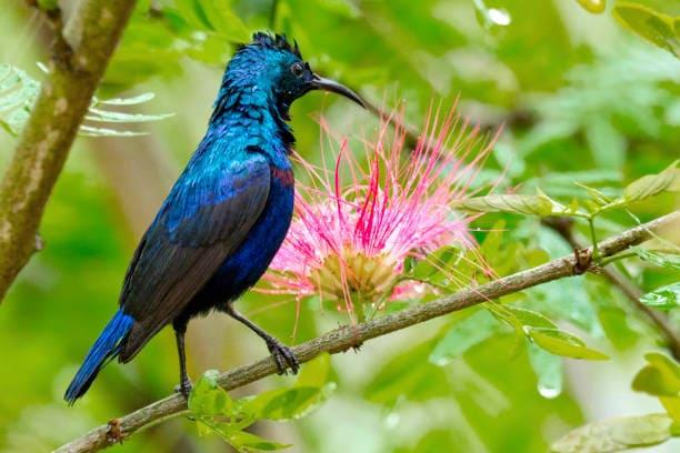 Biodiversity Hotspot1
