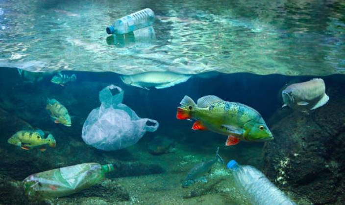pollution ecosystem