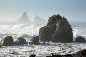 Seagulls watch the waves crash near Brookings, Oregon.