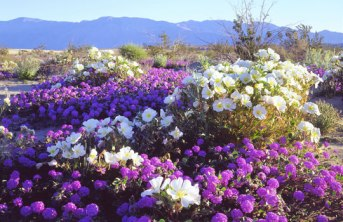 Anza Borrego Desert State Park. Image from ?