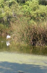 The white spot is a swan.