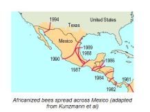 Spread of Africanized bees in Mexico. Image from Geo-Mexico.com
