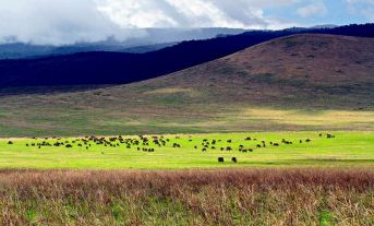 Inside the Ngorongoro Crater. Image from Wikipedia.org.