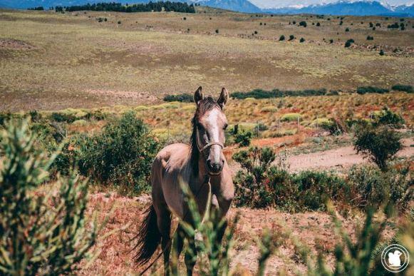 Horse Nirihuau, Bariloche, Argentine
