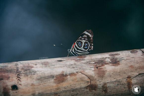 Un magnifique papillon à Iguazu, Argentine