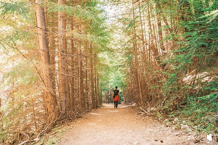 Laguna Negra, début du sentier en forêt