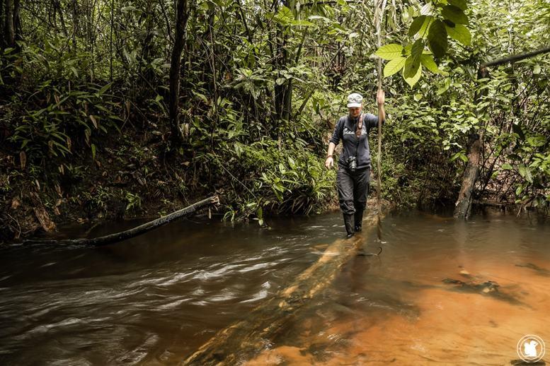 À la découverte de la forêt amazonienne