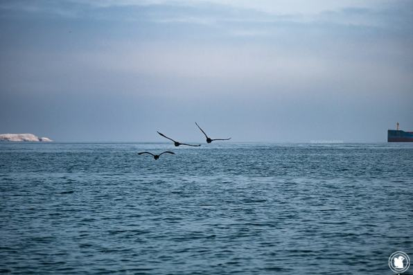 Oiseaux et océan Pacifique - Réserve naturelle de Paracas