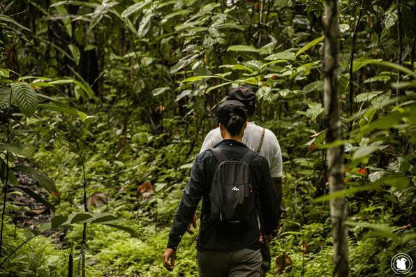 En marche au cœur de la forêt amazonienne