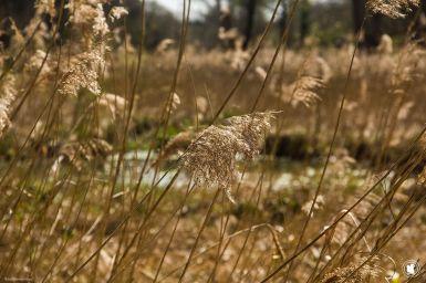 Le marais du sentier maincourt