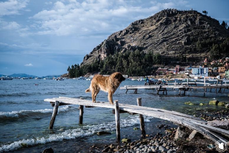 Les chiens de Copacabana