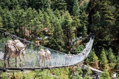 Trek des 3 cols - Pont suspendu et ânes
