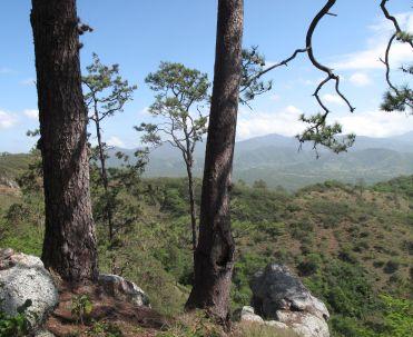 Flora - Cerro las tres señoritas