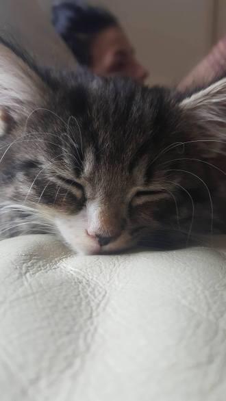 Sleepy Louie