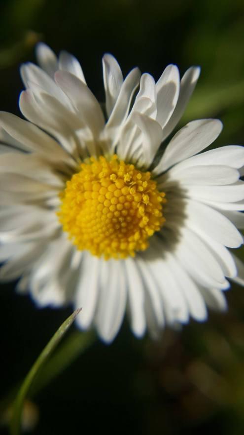Rear Camera - Daisy
