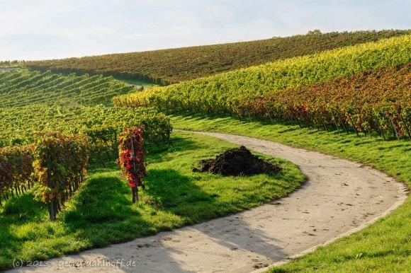 Die Weinberge bei Dolgesheim - Bild Nr. 201310221499