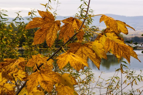 Farbe des Herbstes - Bild Nr. 201311010781