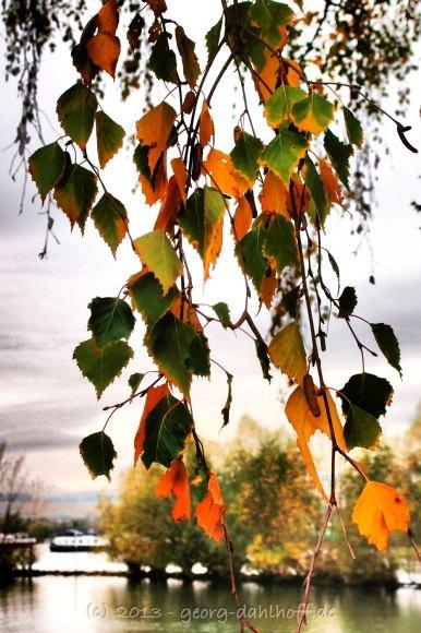 Herbst am Rhein - Bild Nr. 201311010795