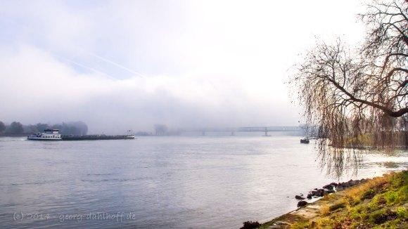 Der Rhein gegenüber der Mainmündung - Bild Br. 201401120866